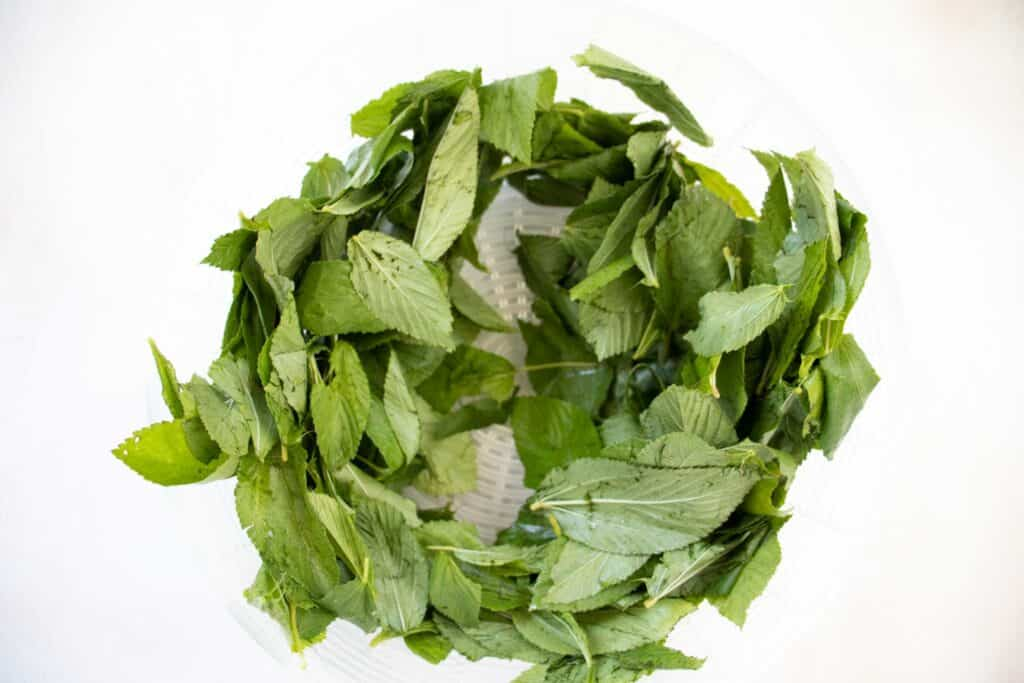 fresh mulukhiya leaves