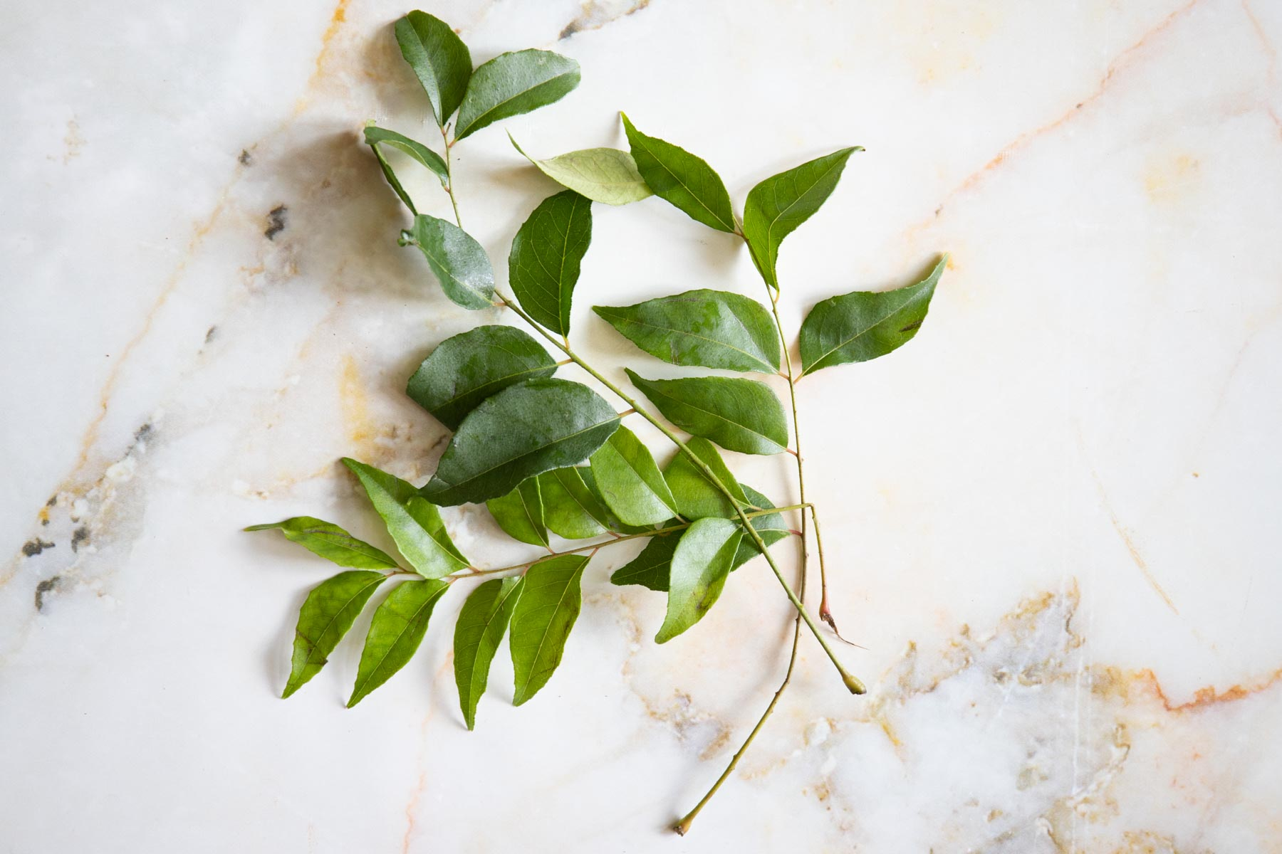 curry leaf on the table